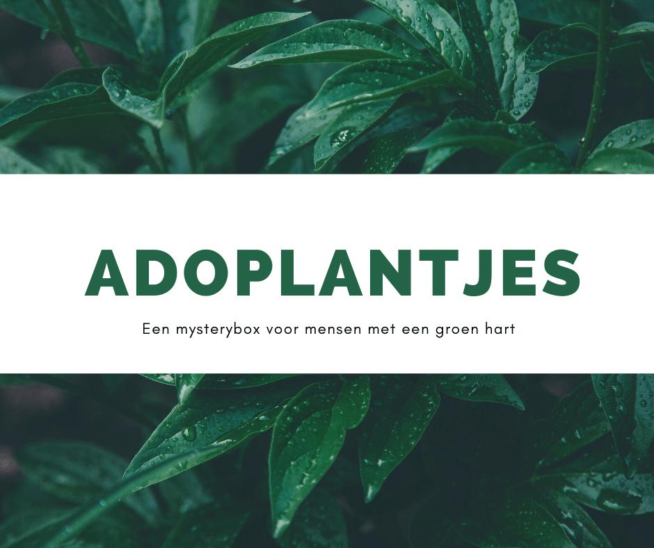 Ontdek onze Adoplantjes