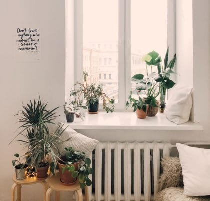 Verschillende planten op een verwarming